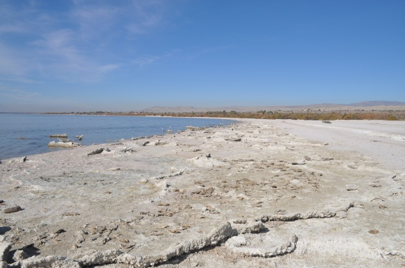 Salt deposits along the shore.