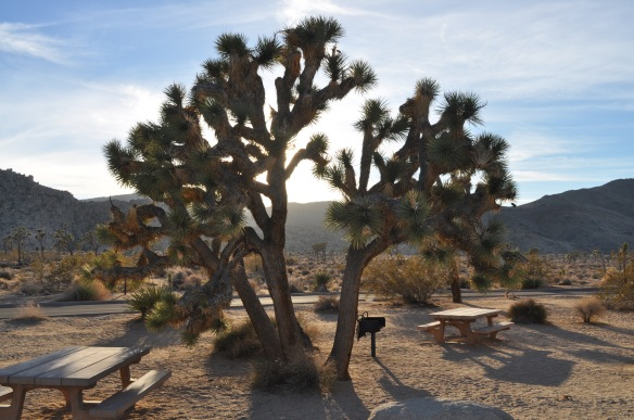 A Joshua Tree. Believe it or not, it is a relative of the lily.