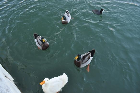 Huey, Dewey, Louie and Aflac